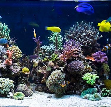 acuarios-marinos